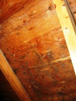 Mold growth on the roof in the attic due to air leakage